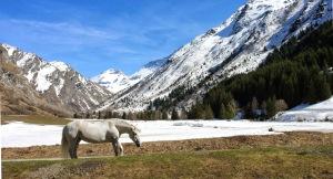 La Champagny Horse